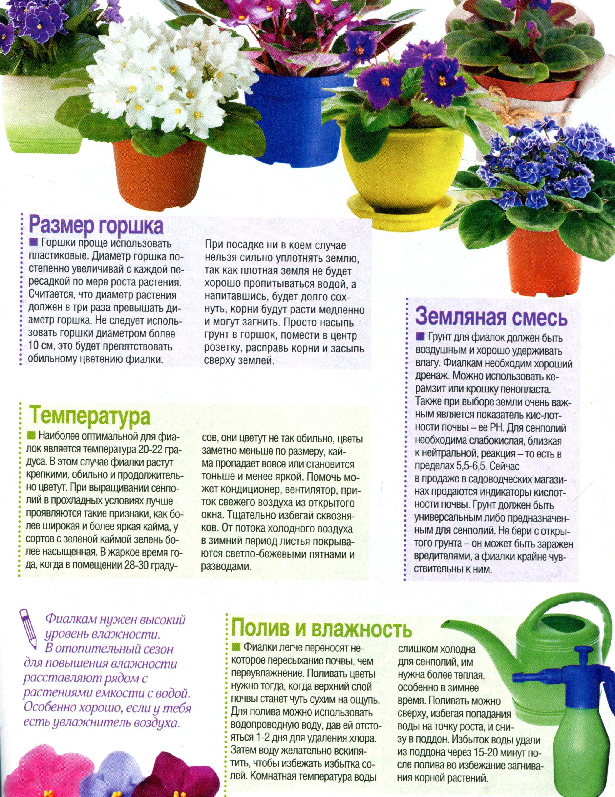 Как поливать фиалки в домашних условиях: различные способы? 81