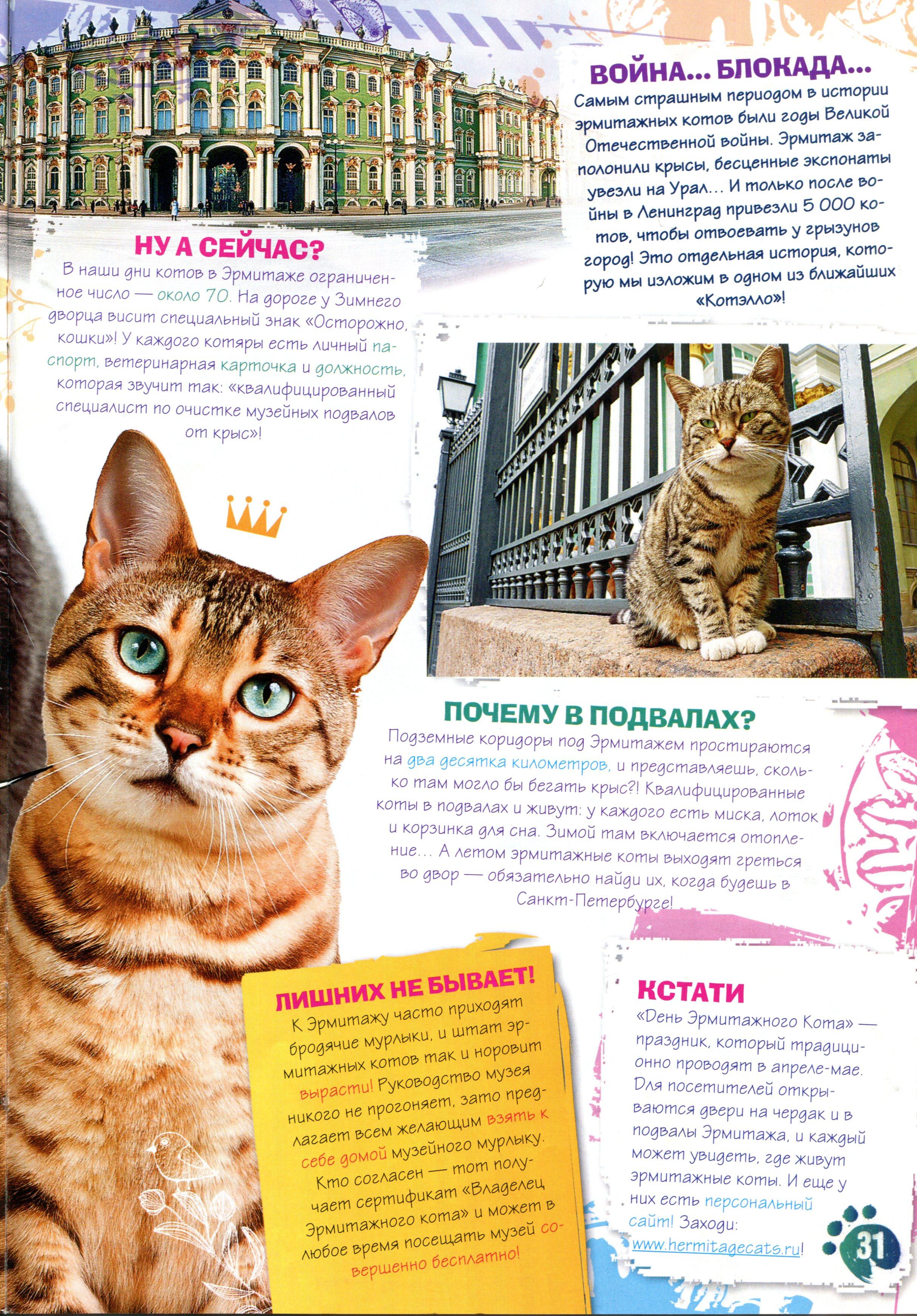 Коты эрмитажа открытки 47